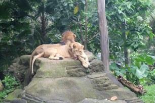 Bali Zoo 12