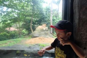 Bali Zoo 13