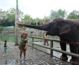 Bali Zoo 6