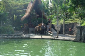 Bali Zoo 7